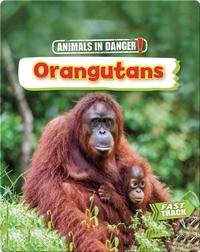 Animals in Danger: Orangutans