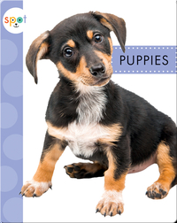 Baby Farm Animals: Puppies