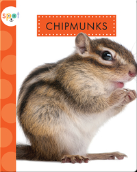 Backyard Animals: Chipmunks
