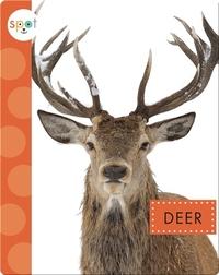 Backyard Animals: Deer