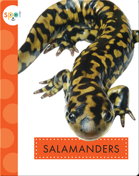 Backyard Animals: Salamanders