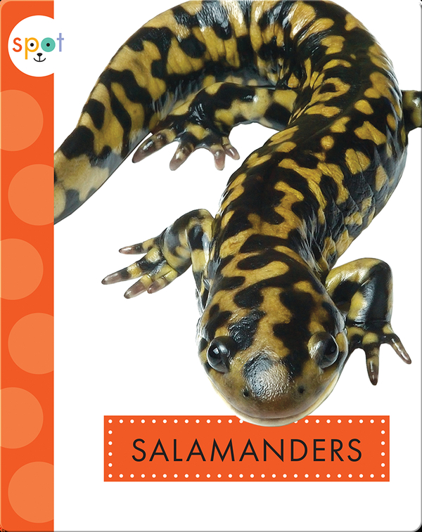 Backyard Animals: Salamanders