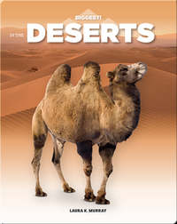 In The Deserts