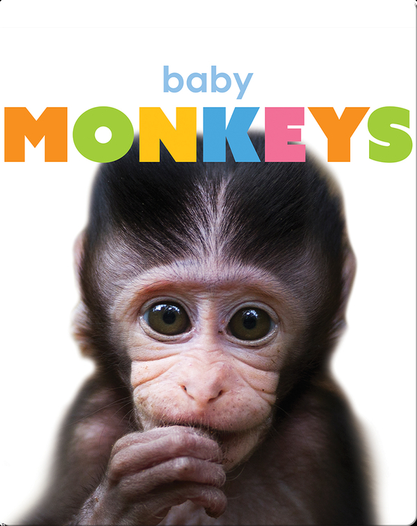 Starting Out: Baby Monkeys