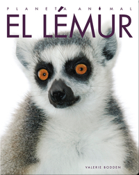Planeta Animal: El Lémur