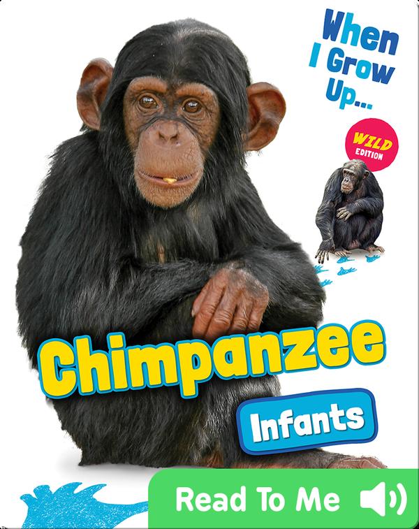 Chimpanzee Infants