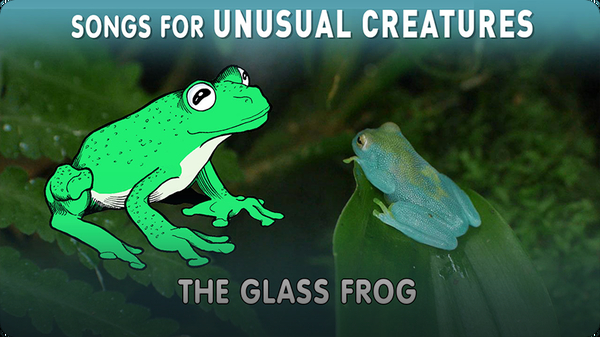 Songs for Unusual Creatures: The Glass Frog