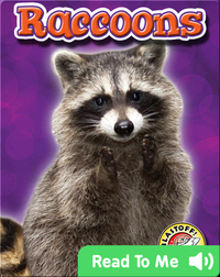 Raccoons: Backyard Wildlife