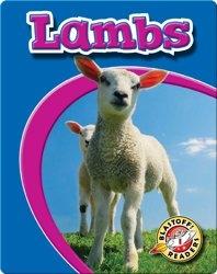 Lambs: Watch Animals Grow