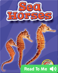 Sea Horses: Oceans Alive