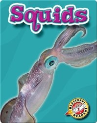 Squids: Oceans Alive