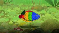 I'm A Rainbow Fish