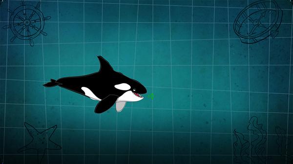 I'm A Killer Whale