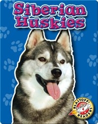Siberian Huskies: Dog Breeds