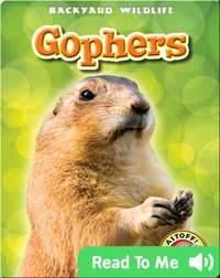 Gophers: Backyard Wildlife