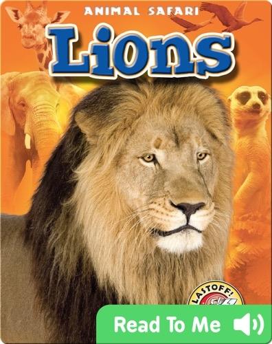 Lions: Animal Safari