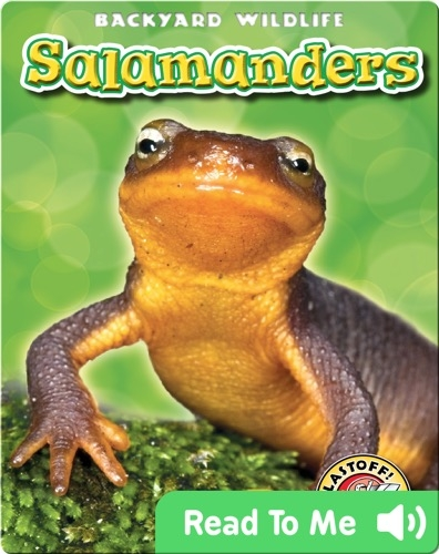 Salamanders: Backyard Wildlife