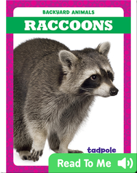 Backyard Animals: Raccoons