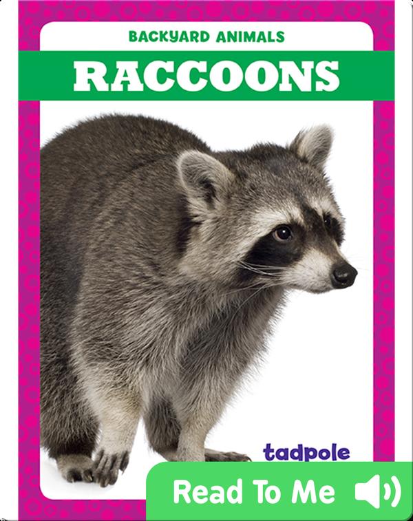 Backyard Animals: Raccoons