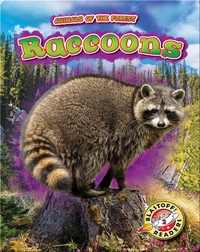 Animals of the Forest: Raccoons