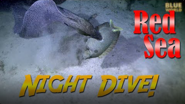 Jonathan Bird's Blue World: Red Sea Night Dive!