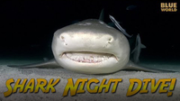 Jonathan Bird's Blue World: Night Diving with Sharks!