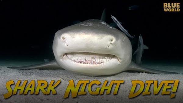 Jonathan Bird's Blue World: Night Diving with Sharks!
