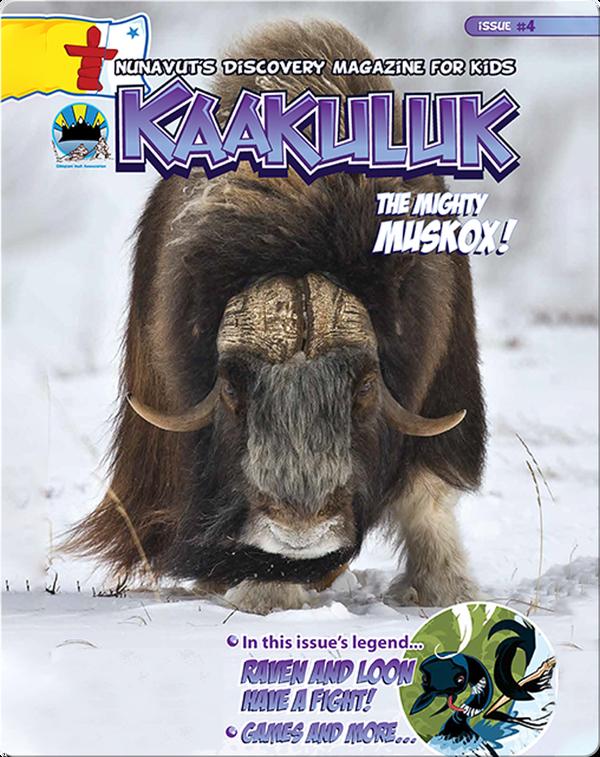 Kaakuluk: Muskox!