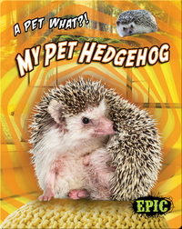 My Pet Hedgehog