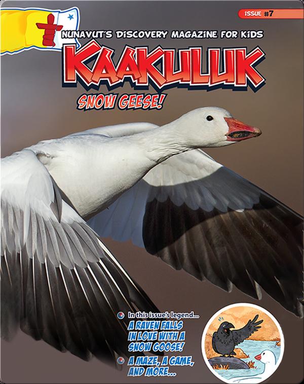 Kaakuluk: Snow Geese!