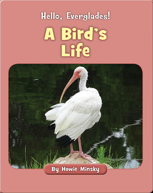 Hello, Everglades!: A Bird's Life