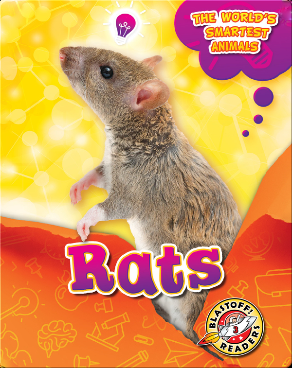 The World's Smartest Animals: Rats