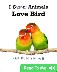 I See Animals: Love Bird