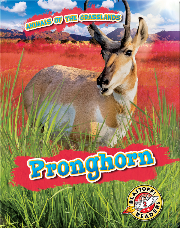 Animals of the Grasslands: Pronghorn