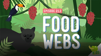 Crash Course Kids: Food Webs