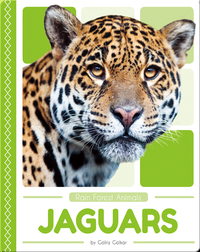 Rain Forest Animals: Jaguars