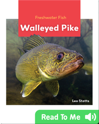 Freshwater Fish: Walleyed Pike