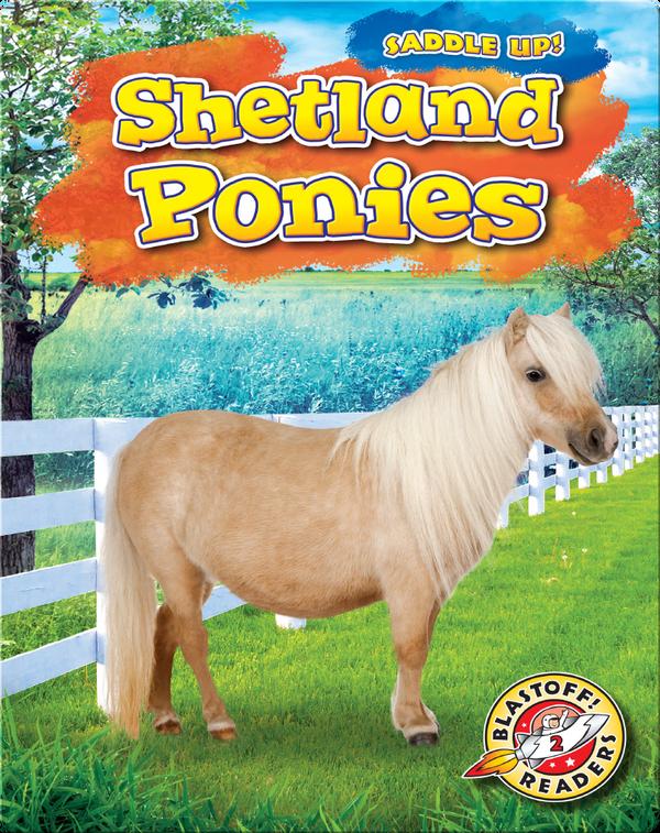 Saddle Up!: Shetland Ponies