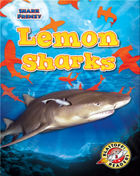 Shark Frenzy: Lemon Sharks