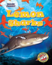 Shark Frenzy: Lemon Sharks