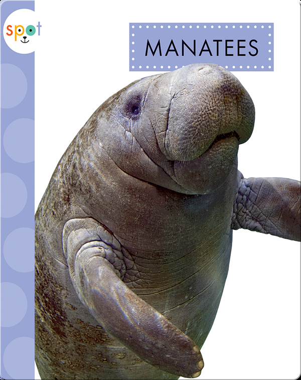 Ocean Animals: Manatees