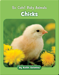 So Cute! Baby Animals Chicks