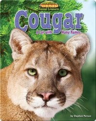 Cougar: A Cat With Many Names