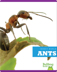 Insect World: Ants