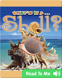 What's In A... Shell?