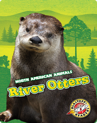 North American Animals: River Otters