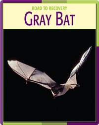 Road To Recovery: Gray Bat