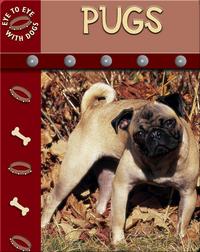 Eye To Eye With Dogs: Pugs