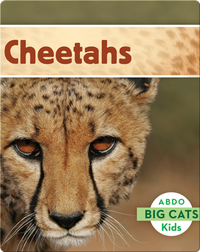 Big Cats: Cheetahs