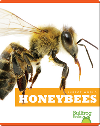 Insect World: Honeybees